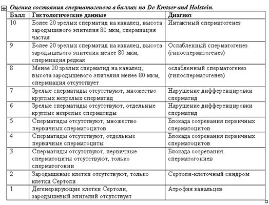 Таблица сперматогенез