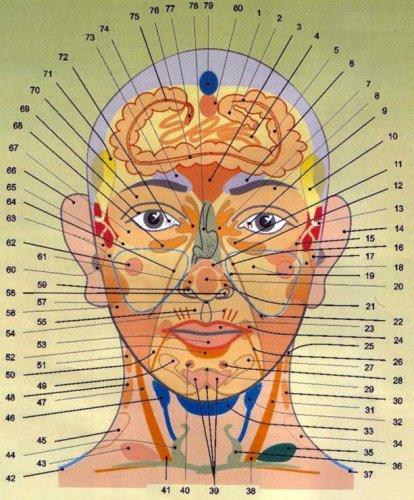 Лицо - проекция внутренних органов человека