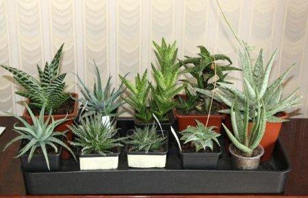 Комнатные растения. 9 самых лучших очистителей воздуха